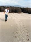 Examining sea turtle tracks, Sapelo Island, GA