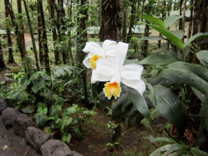 One of many beautiful orchids in Costa Rica.