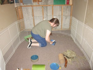 Kaitee, a Hampshire College student, helps clean the rabbit pen.