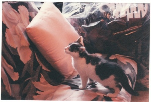 Small as a kitten in October 1995.